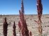 Retour en Bolivie - De Colchane aux portes du salar d Uyuni